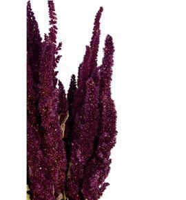 Amaranthus seco rojo - AMASECROJ