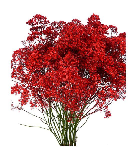 Paniculata rojo - GYPROJ