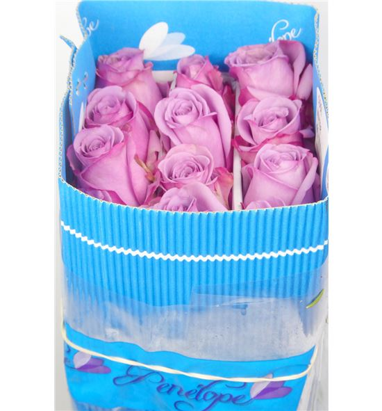 Rosa col coolwater 50 - RCCOOWAT