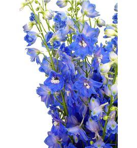 Delphinium candle blue shades 80 - DELCANBLUSHA