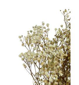 Gypsophila preservado natural - GYPPRENAT