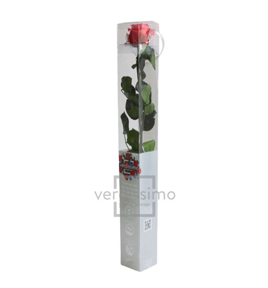 Rosa amorosa preservada estandar prz/1490 - PRZ1490-05-ROSA-TALLO-STANDARD