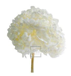 Hortensia preservada premium hrt/0000 - HRT0000-01-HORTENSIA