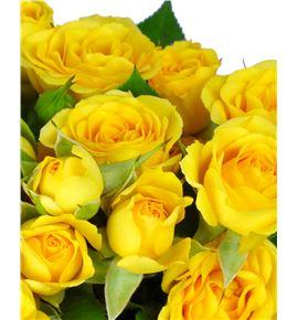 Rs ramificada yellow babe 50 - RTRYELBAB