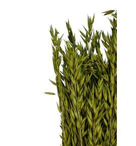 Avena seca verde - AVESECVER