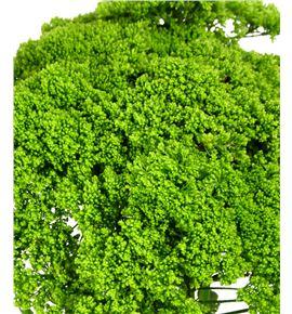 Trach briba green 70 - TRABRIGRE