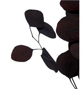 Euc populus preservado marron - EUCPOPMAR