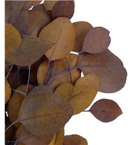 Euc populus preservado marron claro - EUCPOPMARCLA