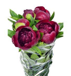Paeonia red charm x5 45 - PAEREDCHA