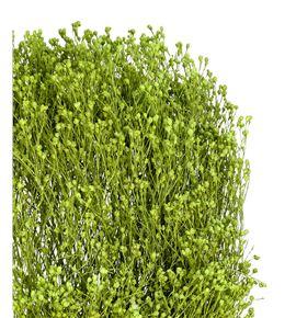Broom bloom seco verde claro - BROSECVERCLA