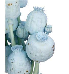 Papaver seco azul claro - PAPSECAZUCLA