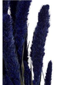 Setarea azul - SETAZU