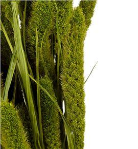 Setarea verde - SETVER
