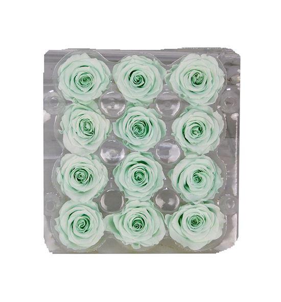 Rosa preservada 12 unid verde claro g-01 sp - G-01SP