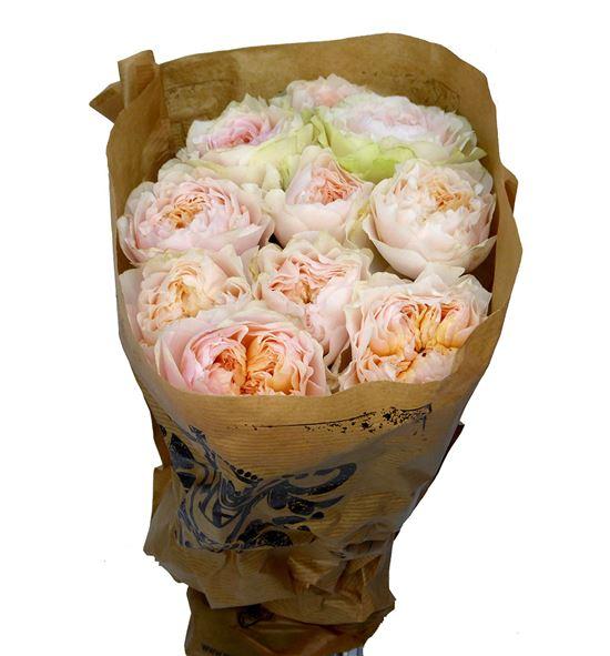 Rosa hol victorian bride 50 - RGRVICBRI