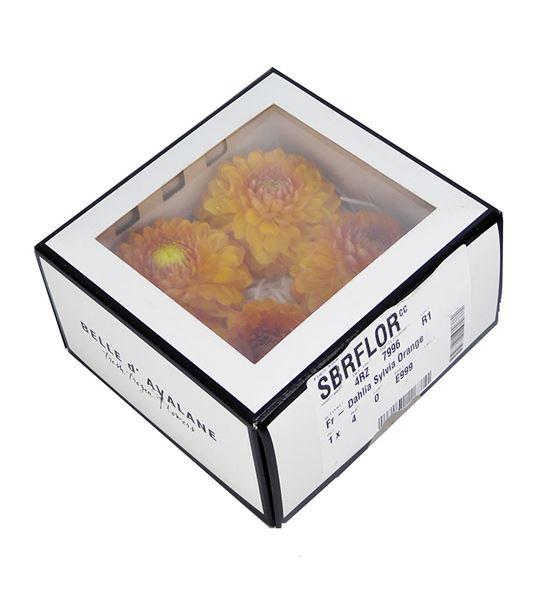 Dahlia preservada naranja 4und - DAHPRENAR