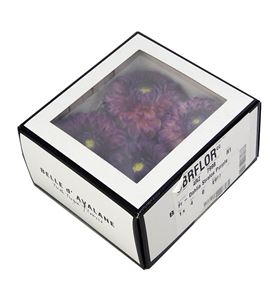 Dahlia preservada purpura 4und - DAHPREPUR