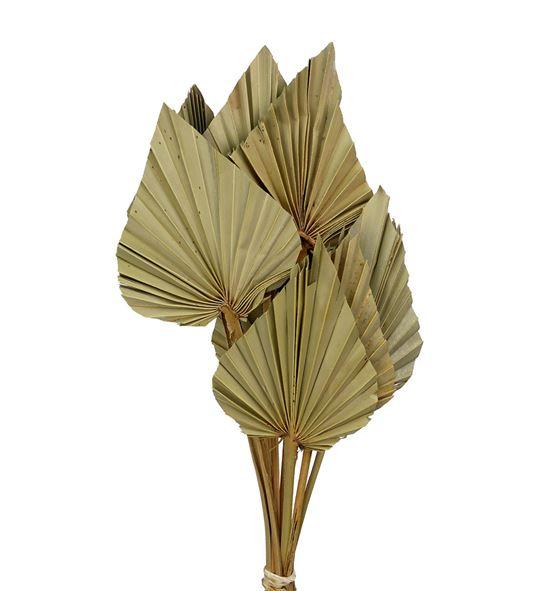 Palmito seco natural - PALSEC