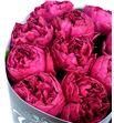 Rosa raspberry elegance 50 - RGRRASELE1