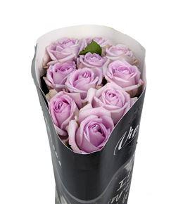 Rosa hol patchouli 50 - RGRPATC