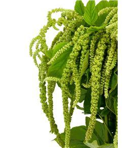 Amaranthus viridis 85 - AMAVIR