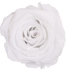 Rosa amorosa preservada granel prz/3000 - PRZ3000-03-ROSA-TALLO-STANDARD