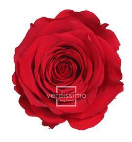 Rosa amorosa preservada granel prz/3200 - PRZ3200-03-ROSA-TALLO-STANDARD