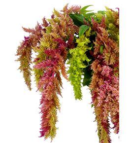 Amaranthus caud magic spider 75 - AMACAUMAGSPI