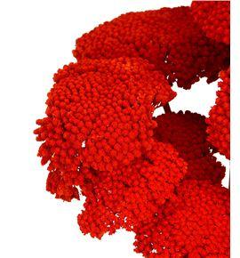 Achilea seca naranja oscuro - ACHSECNAR