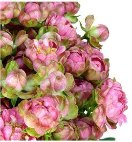 Rs ramificada wild radish 50 - RTRWILRAD