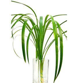 T-grass sup 90cm - TGRA