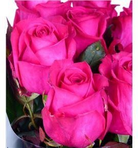 Rosa hol. ivy 50 - RGRIVI