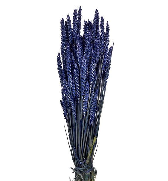 Trigo seco azul - TRISECAZU