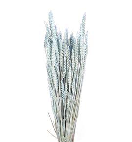 Trigo seco azul claro - TRISECAZUCLA