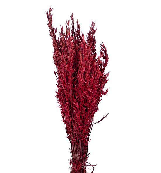 Avena seca roja - AVESECROJ