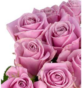 Rosa hol keano 55 - RGRKEA