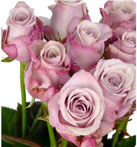 Rosa hol. lovelace 50 - RGRLOV