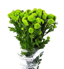 Marg hol. feeling green - MFEEGRE