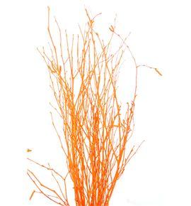 Berk naranja - BERNAR