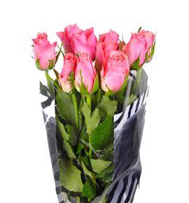 Rosa hol. ace pink 50 - RGRACEPIN