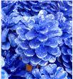 Piña azul purpurina x50 - PINAZUPUR1