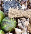 Bruch ball naturel lime x40 - BRUBALLIM1