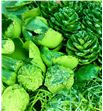 Indian mix verde purpurina x40 - INDVERPUR1