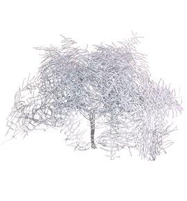 Helecho coral plata - HELCORPLA