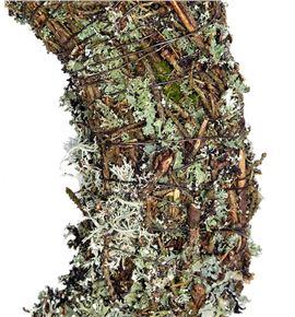 Corona larix 30cm - CORLAR