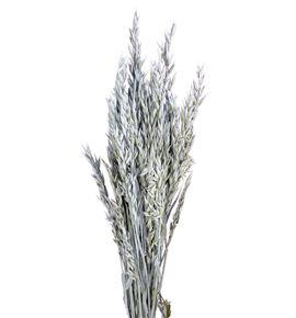 Avena seca gris - AVESECGRI
