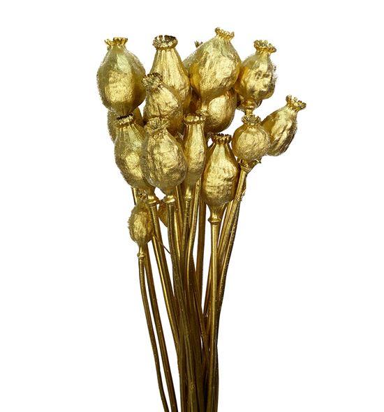 Papaver seco oro - PAPSECORO