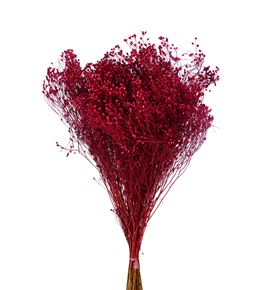 Broom bloom preservado rojo - BROSECROJ