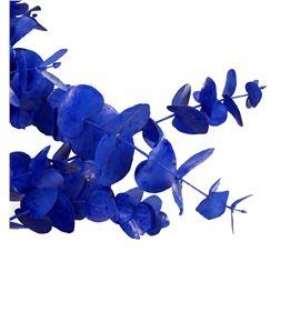 Eucaliptus cinerea azul - EUCINAZU