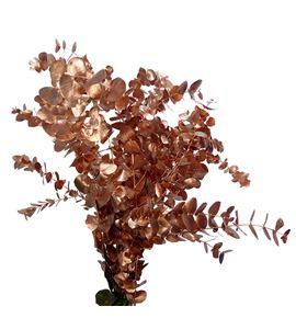 Eucaliptus cinerea cobre - EUCINCOB